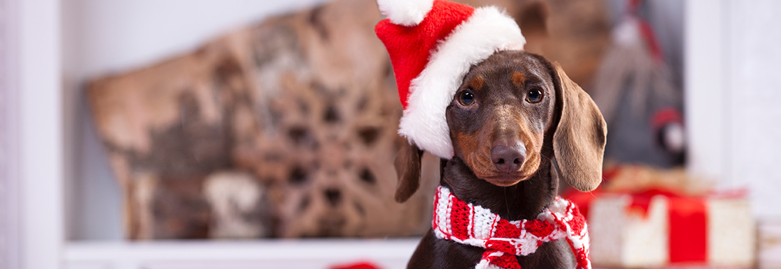 Top tips for keeping your pets safe over Christmas